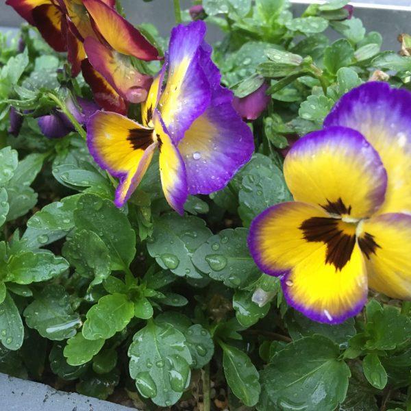花の季節の変わり目