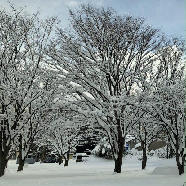 雪の成人式