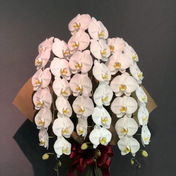 胡蝶蘭の販売について